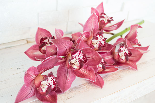 Orchid, Cymbidium