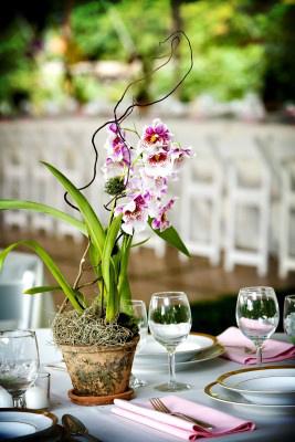 Eco-friendly flowers